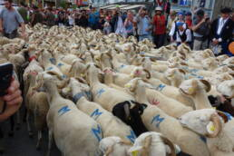 Sheep passing through the village of Seix in the French Pyrenees